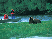 Knight Inlet Lodge - Grizzly bear watching