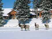 Fairmont Jasper Park Lodge - Wildlife sighting at the lodge