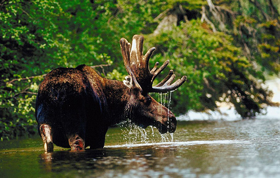Plan Your Canada Wildlife Tour Today