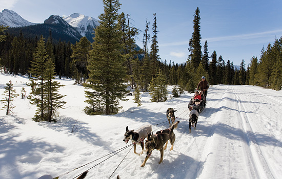 Dog Sledding Tour - Dog Sledding Tour