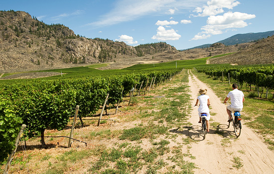Time to explore some of Canada's best wineries - Time to explore some of Canada's best wineries
