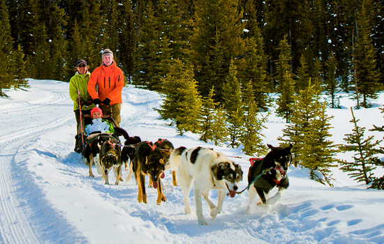 An authentic dogsledding experience