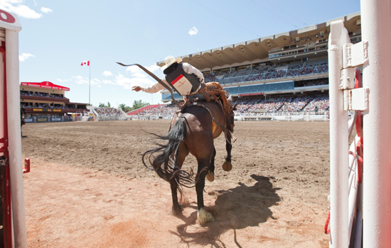 Add a visit to the rodeo at the Calgary Stampede