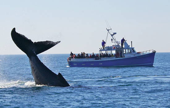 Whale watching from Cape Breton