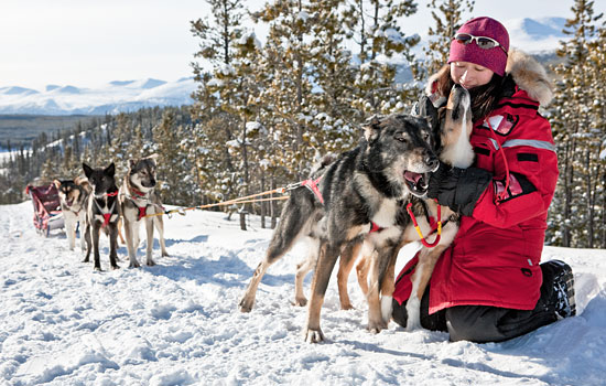 Make some new friends on a dog sledding excursion