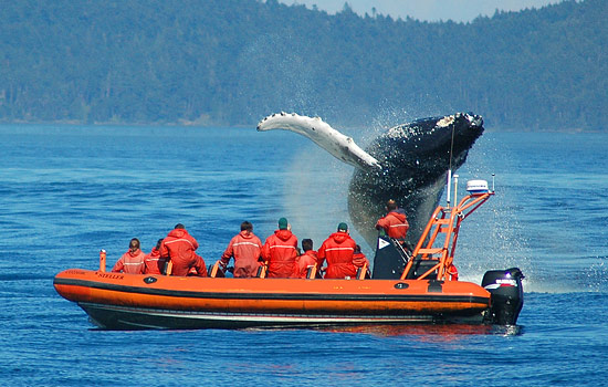Whale watching tour in Victoria, Vancouver Island