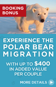 Limited Time Offer – Experience the Polar Bear Migration 2017