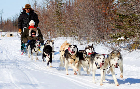 And learn about life in the far north or try dogsledding.