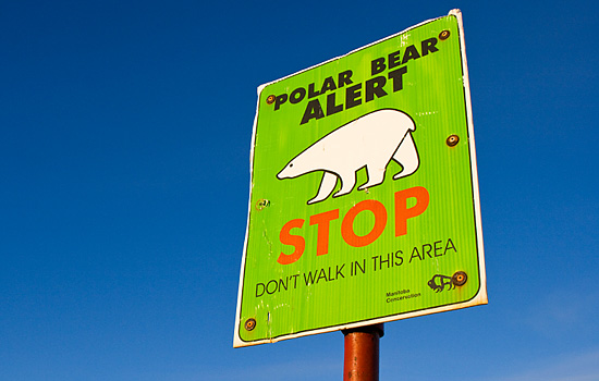 A polar bear alert stop sign in Churchill