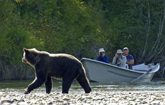 Bears of the Pacific Northwest