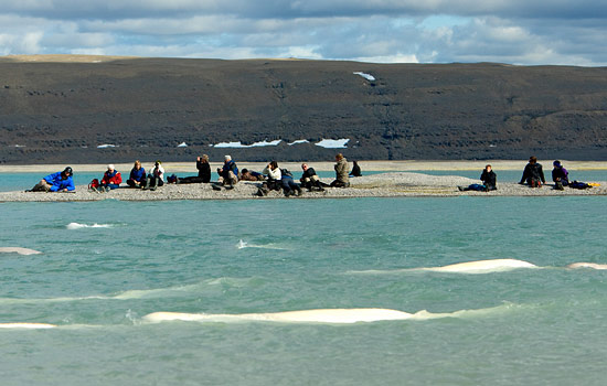 Viewing beluga whales up close in the arctic