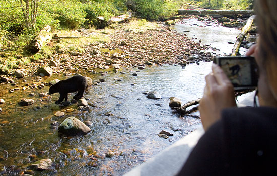 Photographing a bear