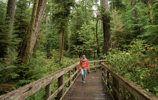 Explore Cathedral Grove on Vancouver Island