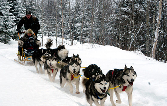 A winter dogsled ride