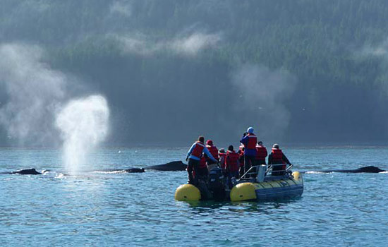 Passengers view whales on a small boat excursion