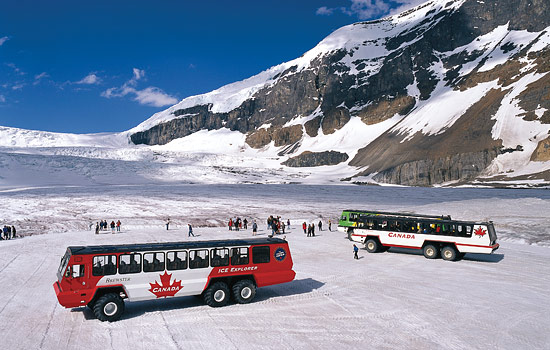 Ice Explorer tour buses transport visitors to the glacier on the Icefields Parkway in the Rockies