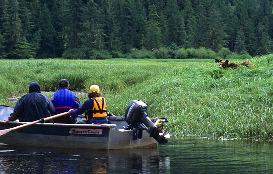 Passengers on a boat watch an adult grizzly bear on the riverbank