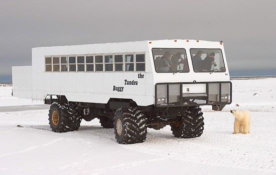 Here, on the edge of Hudson Bay, you'll go on safari in a 'Tundra Buggy'…