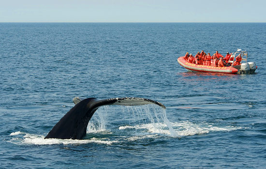 Go whale and bird watching for a chance of spotting whales, dolphins, porpoises and seabirds.