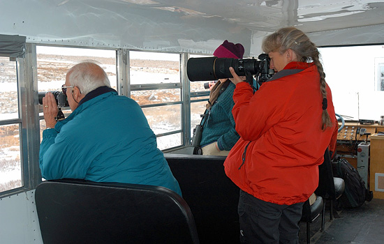 Churchill Nature and Photo Specialist Tour