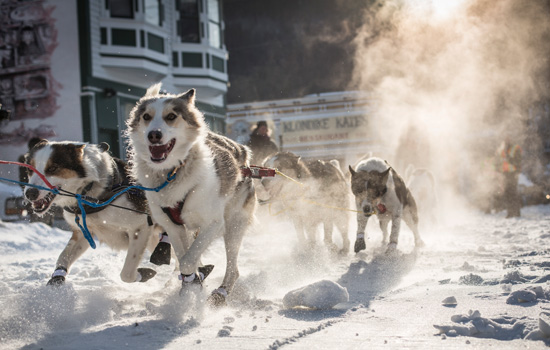 Choose a thrilling dogsledding adventure – gliding over ice and snow behind your team.