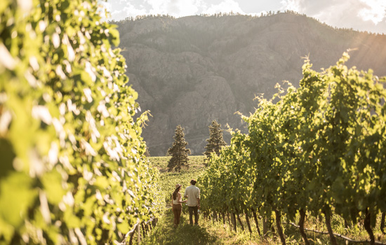 Okanagan Wine Adventure