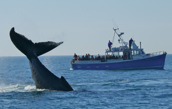 Cape Breton whale watching tour