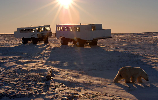 Two women onboard a Tundra Buggy in Churchill edit photos of polar bears on a computer