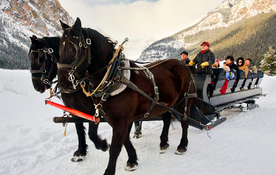 Horses pull a sleigh carrying passengers over frozen Lake Louise in Banff